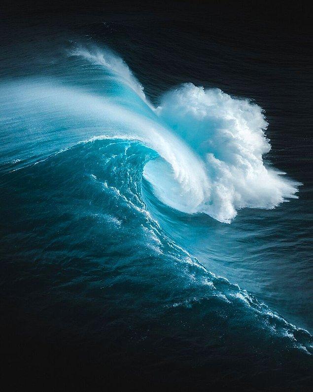 4. Saf Güç - Phil De Glanville (Doğa Kategorisinde Yüksek Övgüye Değer Ödülü)