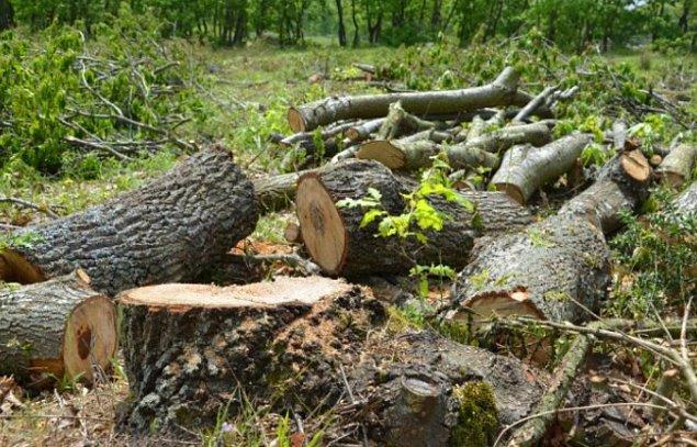 Hemen her gün bazı nedenlerden dolayı doğal alanlar tahrip edilip ağaçlar kesiliyor.