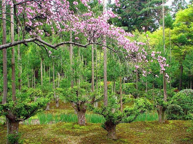 Doğayla barışık bir proje olan Daisugi, aynı zamanda son derece kaliteli keresteler sunuyor.
