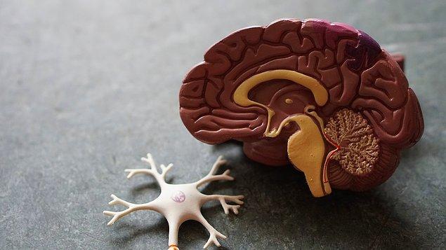 9. Beyninizdeki kan akışı, uykusuz olduğunuzda artar gece uykusunda ise azalır.