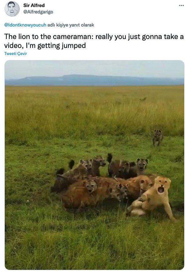 """11. """"Aslan kameramana: Gerçekten video mu çekeceksin, dayak yiyorum."""""""
