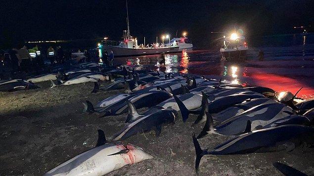 18 adadan oluşan Faroe ilk kez balina ya da yunus avıyla anılmıyor.