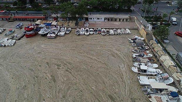 Uzmanlar Uyardı: 'Türkiye'de Görülen Deniz Salyası Ekosisteme Büyük Zarar Verdi'