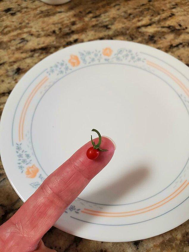 """12. """"Aylarca ektiğim domatesleri bekledim, işte elde ettiğim sonuç."""""""
