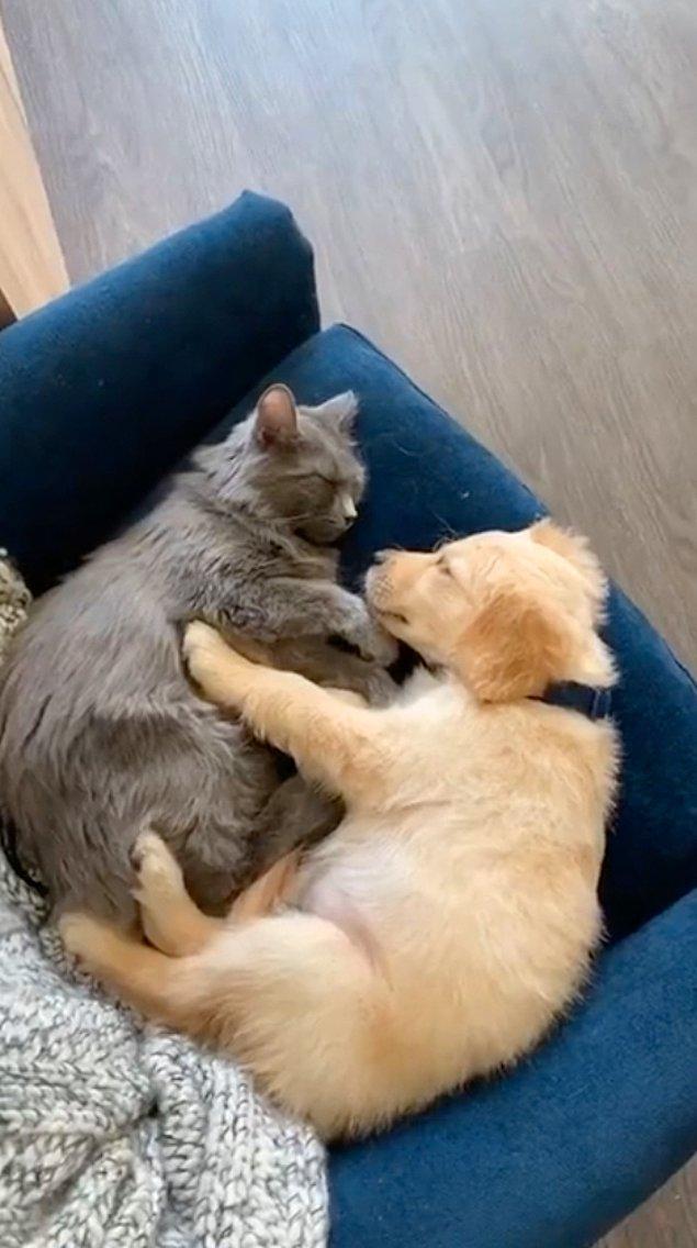 """5. """"Kedimiz sürekli köpek videoları izliyordu ve ona bir sürpriz yapmaya karar verdik."""""""