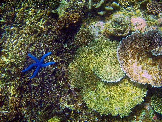 Deniz Yaşamının Kaynağı Olan Mercan Resiflerindeki Canlı Çeşitliliği Yüzde 60 Azaldı...
