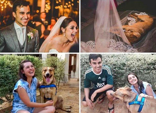 12. Düğün günlerinde araba çarptığını gördükleri köpeği evlat edinen çift.😍
