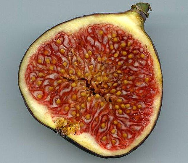 Hiçbir incir ağacının çiçek açtığını görmezsiniz. Çiçekleri aslında o kabuğun içinde bir koza şeklinde açar ve sonrasında olgunlaşarak meyveye dönüşür.