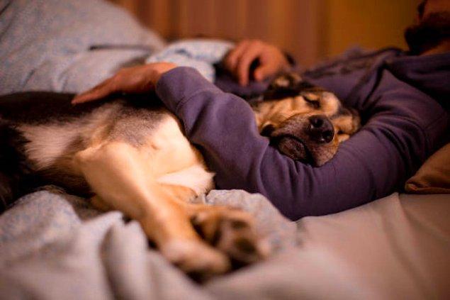 15. Yaşlı dostlarımız bırakın nerede istiyorsa orda yatsın ama kendi yatağını tercih eden dostlarımız için konforlu bir yatak bulduk!