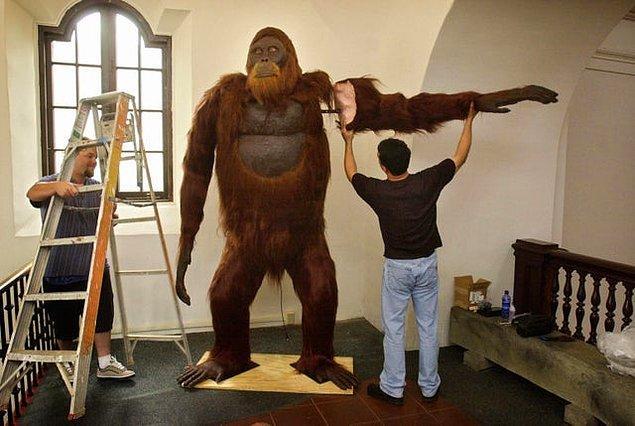 7. Şimdiye dek yaşamış en büyük maymun türü olan Gigantopithecus Blacki'nin canlandırması:
