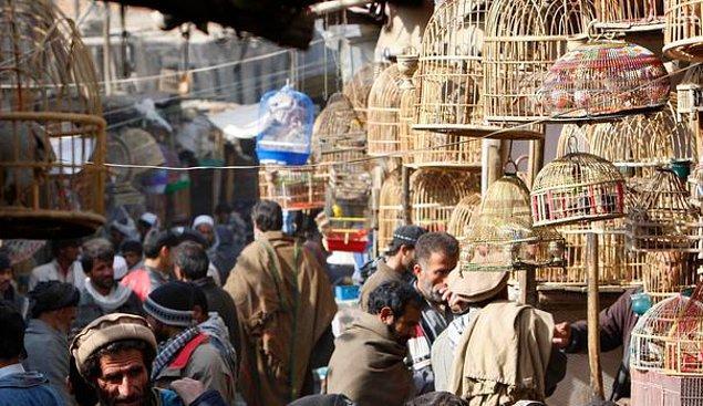 2. Kâbil'deki Ka Firushi Kuş Pazarı