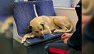 İstanbul'da Yağmurdan Kaçarak Tramvaya Sığınan Köpek