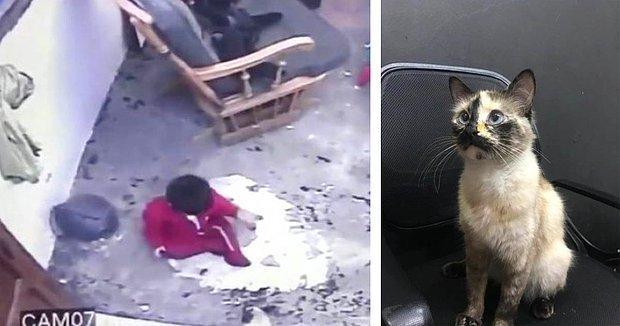 Merdivenlere Yönelen ve Düşme Tehlikesi Yaşayan 1 Yaşındaki Bebeği Kurtaran Kedi