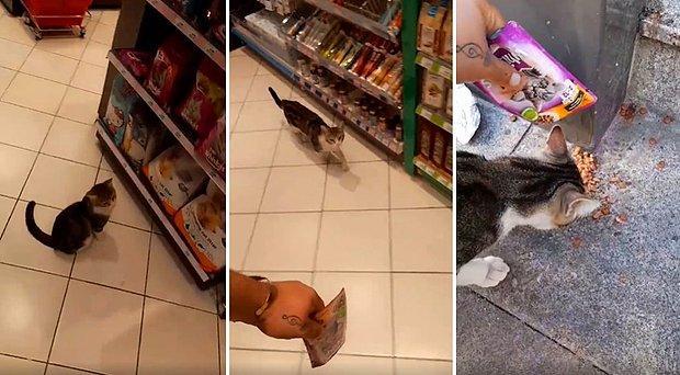 Mama Standının Önünde Durarak Markete Gelen İnsanların Kendisine Mama Almasını Bekleyen Kedi