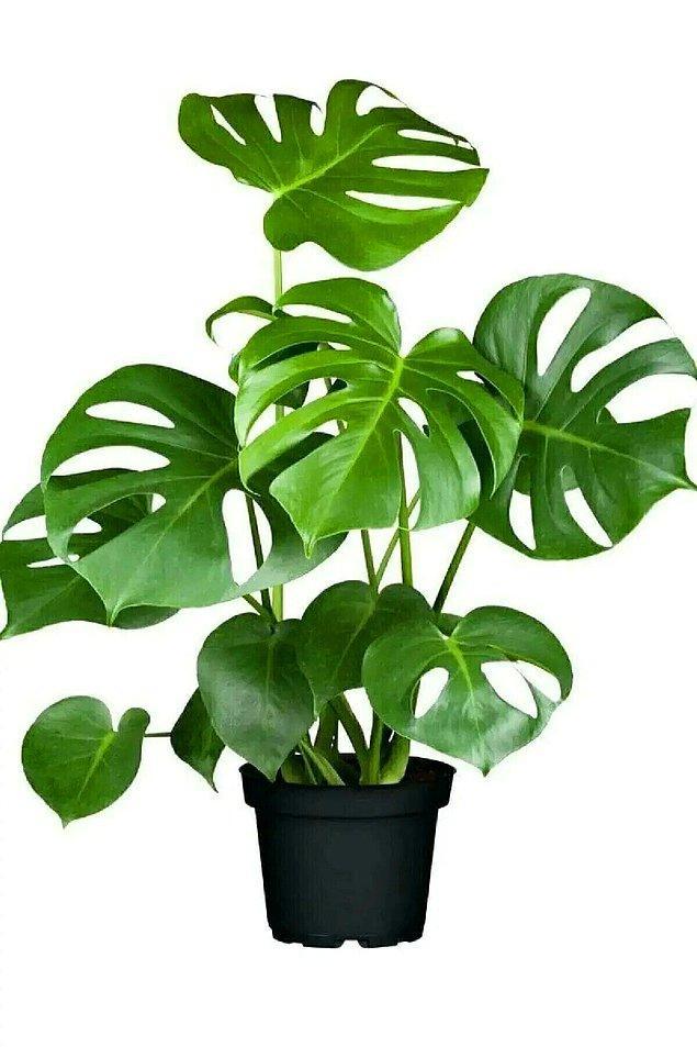 Evinizi dekore etmenin bir diğer yolu bitkiler