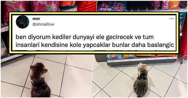 Mağazadaki Müşterilere Haraç Keserek Zorla Mama Aldıran Sevimli Kedi Sosyal Medyanın Gündeminde