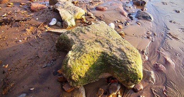 Spinozoritlerin kalıntıları sıklıkla bulunsa da fosillerde kimi kemikler eksik oluyordu.