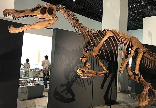 Spinozoritler muhtemelen dik duran büyük etobur dinozorlardı.