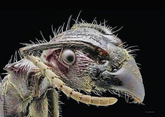 2. Bir elektron mikroskobu altındaki karıncanın ilginç yüzü: