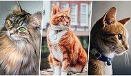 Cana Yakın ve Bir O Kadar da Gizemli Olan Dostlarımız Kediler Hakkında Birbirinden Şaşırtıcı 30 İlginç Bilgi