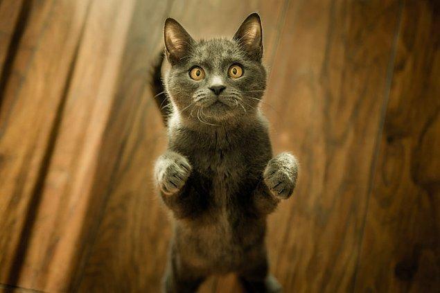 5. Uzaya ilk giden kedi 1963 yılında Fransız bir bilim adamı tarafından gönderilmiş ve güvenli bir şekilde yeniden dünyaya getirilmiştir.