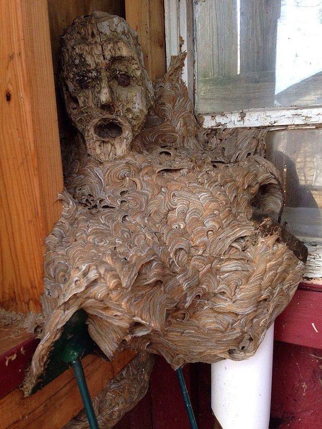 14. Maskenin üzerine yuva yapan eşek arıları.
