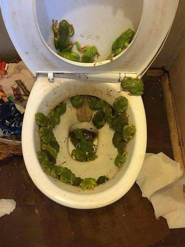 15. Tuvaleti acil kullanmanız gerektiğinde bu manzara ile karşılaşmak.