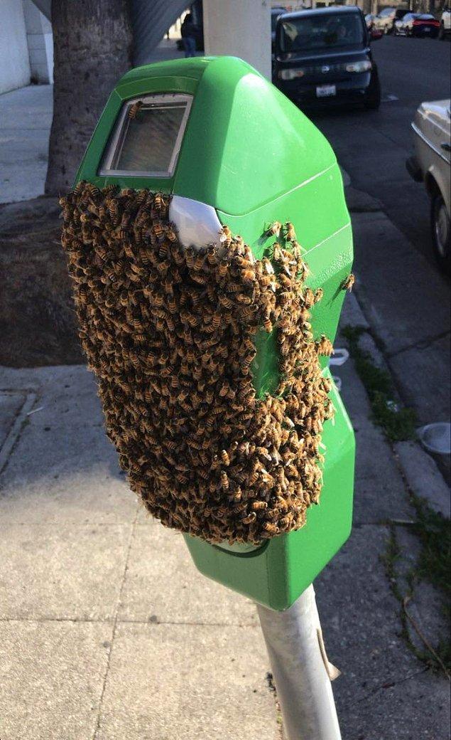 16. Park metrenin üzerindeki arılar.