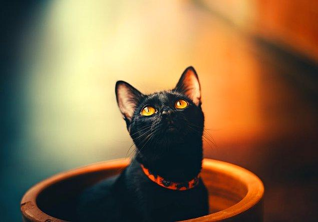 11. Halen bazı kültürlerde neden siyah kedinin uğursuz sayıldığı bilinmemektedir.