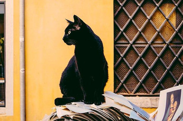 12. Japonya'da siyah kedilerin özellikle genç kadınlara şans getirdiklerine inanırlar.