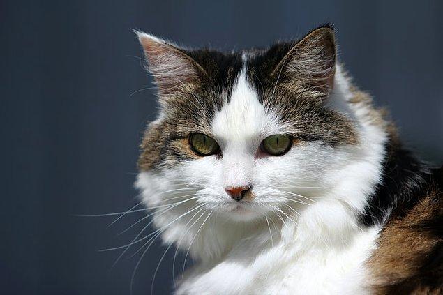 14. Kediler tatlı yiyecekleri tadamazlar.