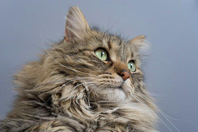 17. 2010 yılında Bristol'da yapılan bir araştırmaya göre, üniversite okumuş insanların bir kedi sahiplenmesi oranının diğer insanlardan daha yüksek olduğu belirtilmiştir.