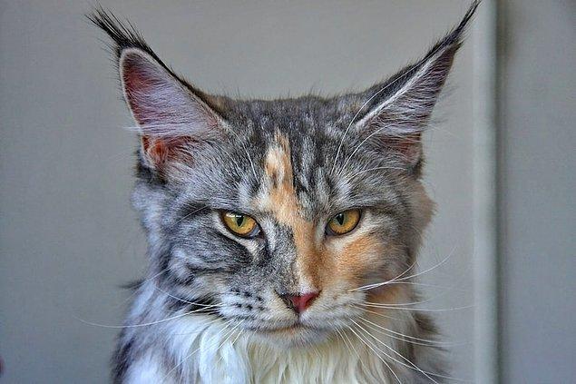 18. Bir insanın 206 kemiği varken, bir kedinin toplam kemik sayısı 244 olarak belirlenir.