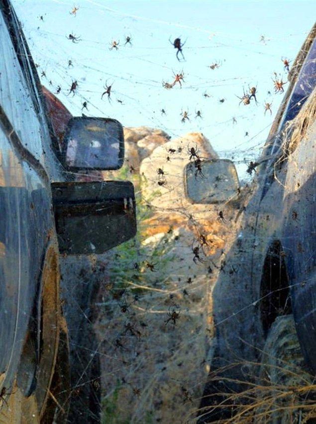 27. Arabanıza binecekken örümcekler tarafından istila edildiğini görmek.