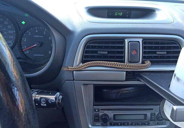 29. Yolculuğun tam ortasında klimadan uzanan bu yılan.