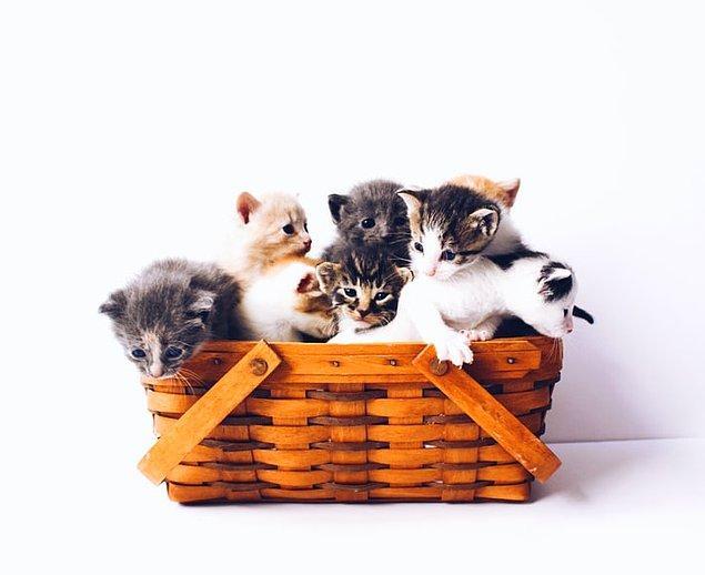 22. Kediler küçük alanları severler. Onların güven duygusunu arttıran bu küçük alanlar, onları sıcak ve rahat tutar.