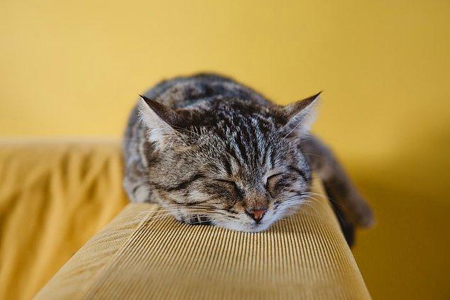 26. Amerika'da ev kedilerinin sayısı evcil köpeklerinin sayısından fazladır. Ülkede 85.8 milyon evcil kedi bulunurken, evcil köpeklerin sayısı 78 milyondur.