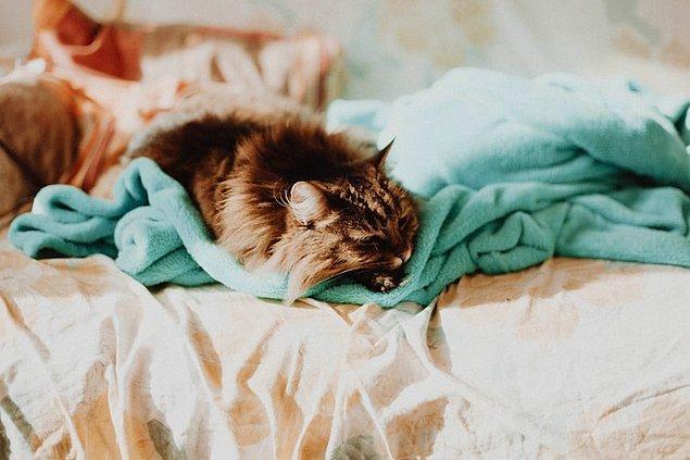 28. Mark Twain, Bronte Kardeşler ve Florence Nightingale gibi tarihin ünlü isimleri kedileri çok severdi.