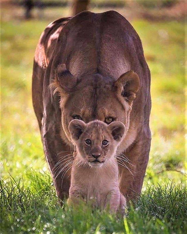4. Yavrusunun güvenliği için arkasına geçen bir anne: