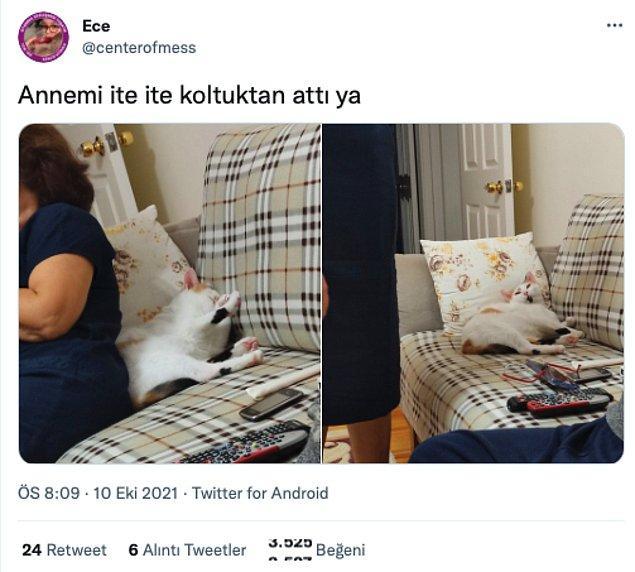 8. Kediler neden böylesiniz?