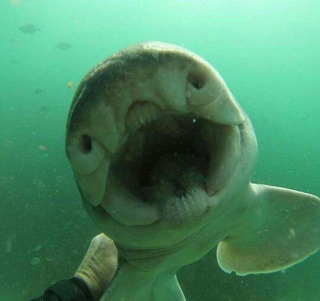 2. Yavru köpek balığıyla arkadaş olan Avustralyalı bir dalgıç okyanusa her girdiğinde köpek balığı kendisine doğru gelip sarılmak istiyormuş.