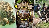 Doğanın Korkutucu Yüzünü İliklerinize Kadar Hissetmenize Sebep Olacak Birbirinden Ürkütücü 15 Yeni Fotoğraf
