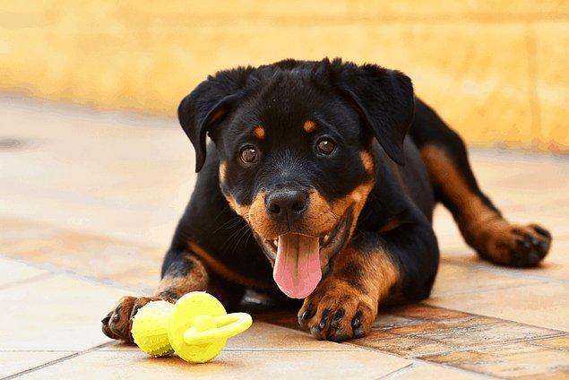 1. Terleyen köpekler