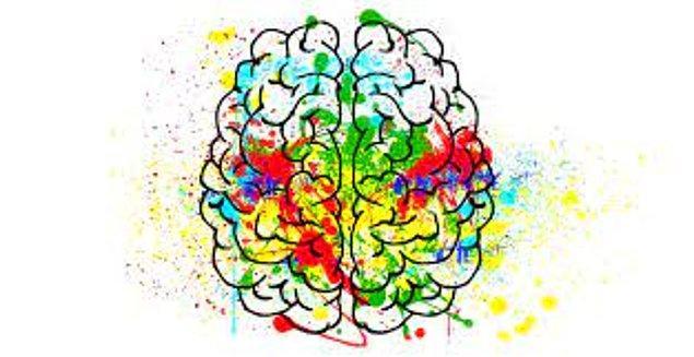 8. İnsanda en gelişmiş beyin bölgesi hangisidir?
