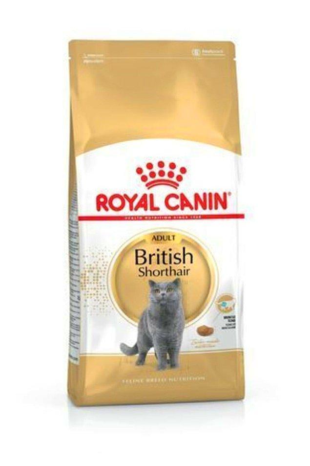 3. En popüler cinslerden olan British Shorthairlar özel bir diyete ihtiyaç duyabiliyor.