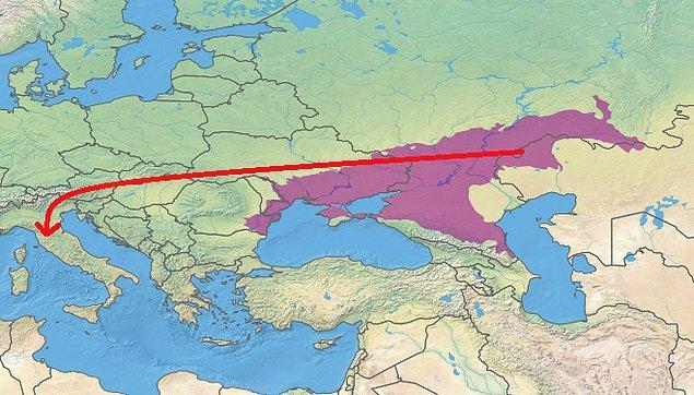 Etrüskler de Romalılar gibi Karadeniz-Hazar steplerinden geldi.