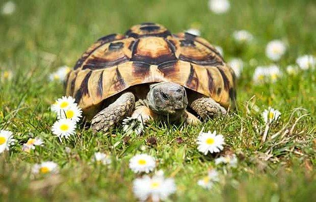 Kaplumbağa Ne Yer, Nasıl Beslenir?