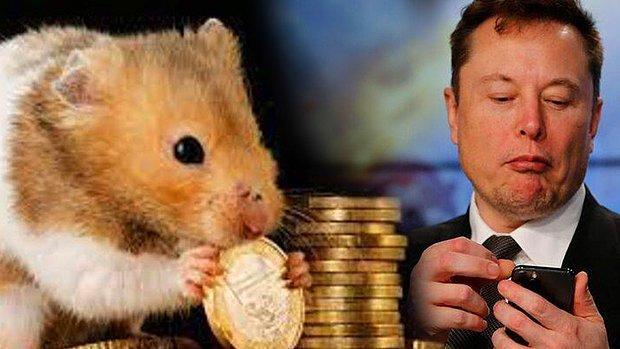 Hamster Coin Nedir? Hamster Coin Nasıl Alınır? İşte Elon Musk Duyurdu!