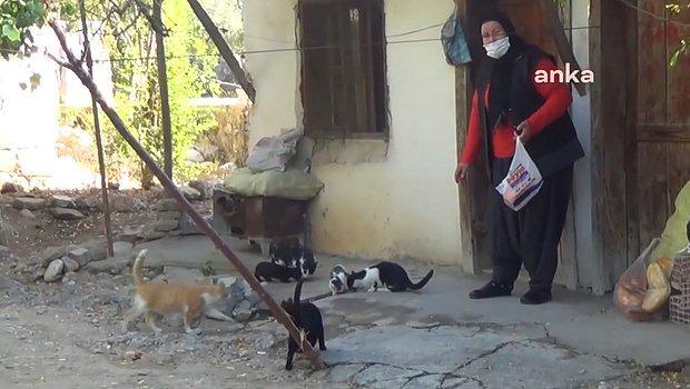 650 TL Dul Maaşıyla Geçinmeye Çalışan Kadın: 'Tavuk Kırıntısı Alıyorum, Pişiriyorum Kedilerle Beraber Yiyorum'