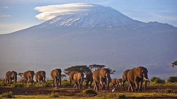 Dünya Meteoroloji Örgütü: Afrika'da Kilimanjaro Dahil Üç Tropik Buz Sahası 20 Yıl İçinde Yok Olacak...